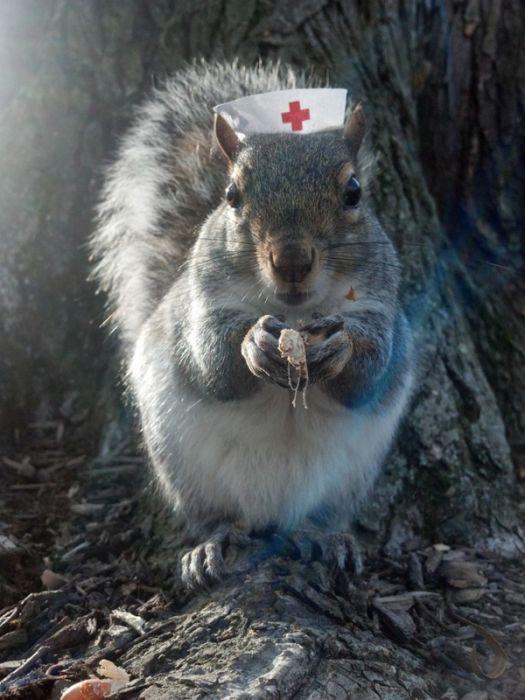 Pet Squirrel (27 pics)