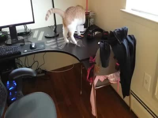 How to Keep Your Cat off the Desk
