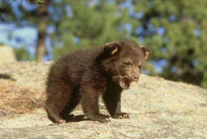 Baby Animals by the State They Represent (51 pics)
