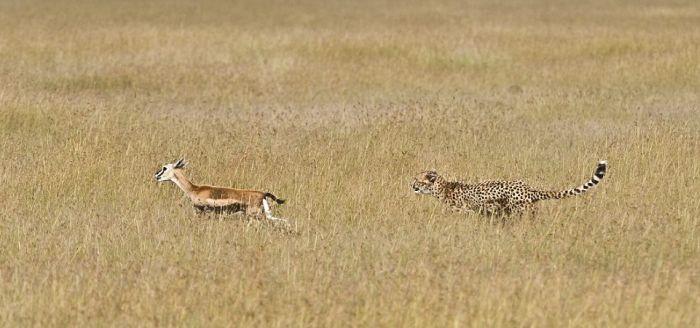 Camouflaged Big Cat (5 pics)
