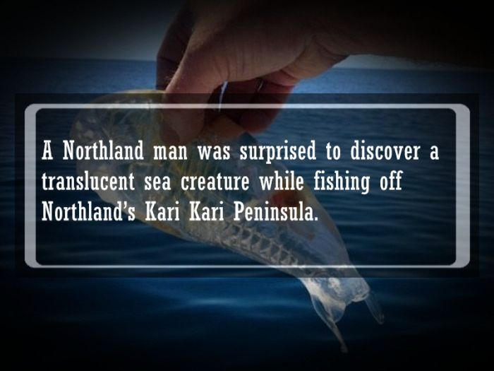 Interesting Facts and Stories (19 pics)