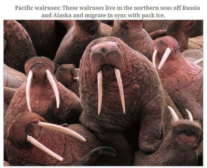 Great Animal Migrations (13 pics)