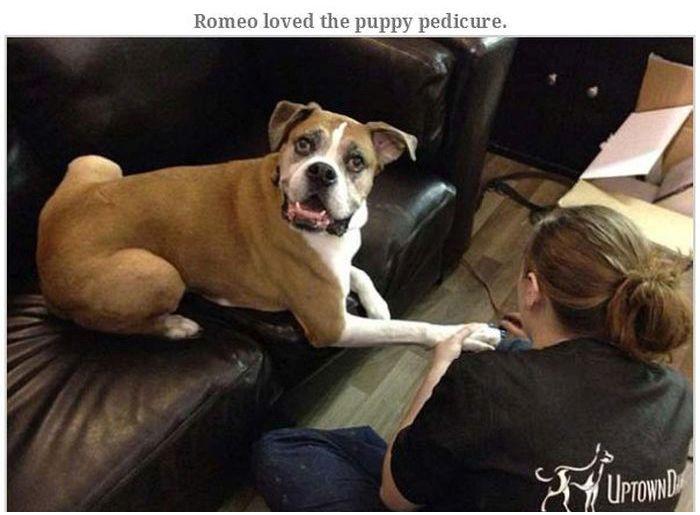 Romeo's Last Adventure (19 pics)