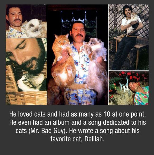 Facts About Freddie Mercury (11 pics)