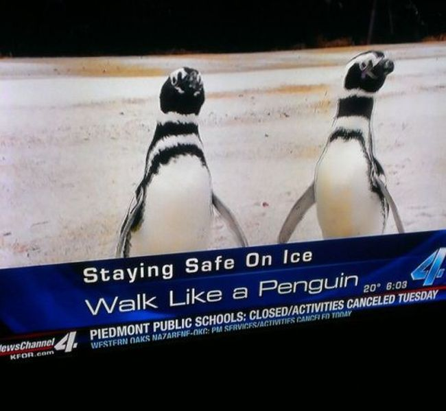 Weird Local News Captions. Part 8 (35 pics)