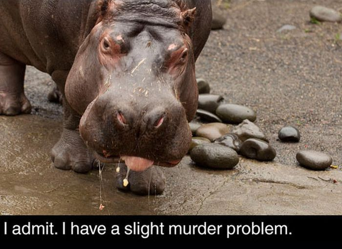 Fun Facts About Hippos (17 pics)