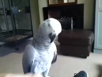 Parrot Doesn't Like to Be Touched