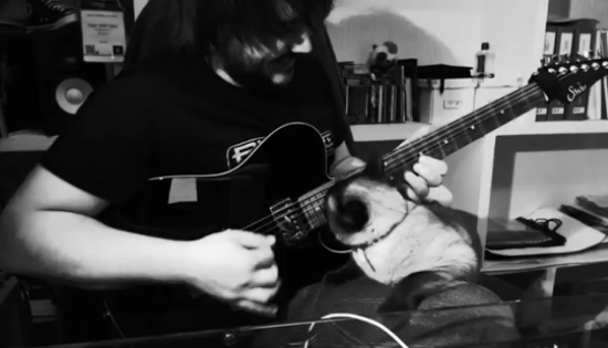 Cat Hates When Its Master Plays Guitar