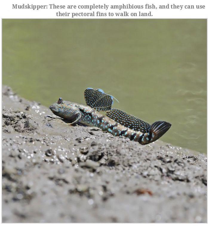 Unusual Animals (20 pics)
