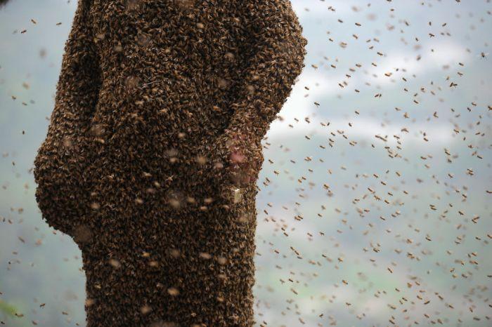 460,000 Bees (12 pics)