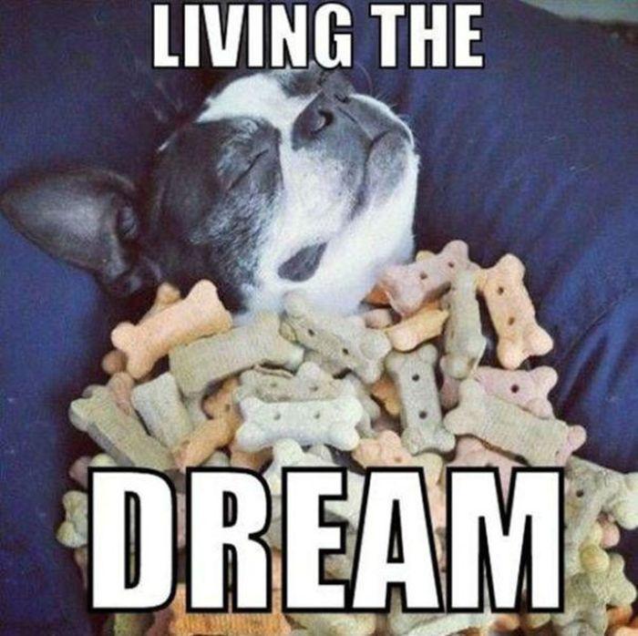 Living the Dream (44 pics)