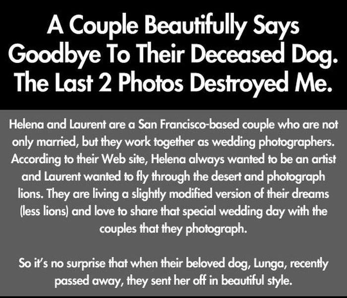 Saying Goodbye to Their Dog (9 pics)