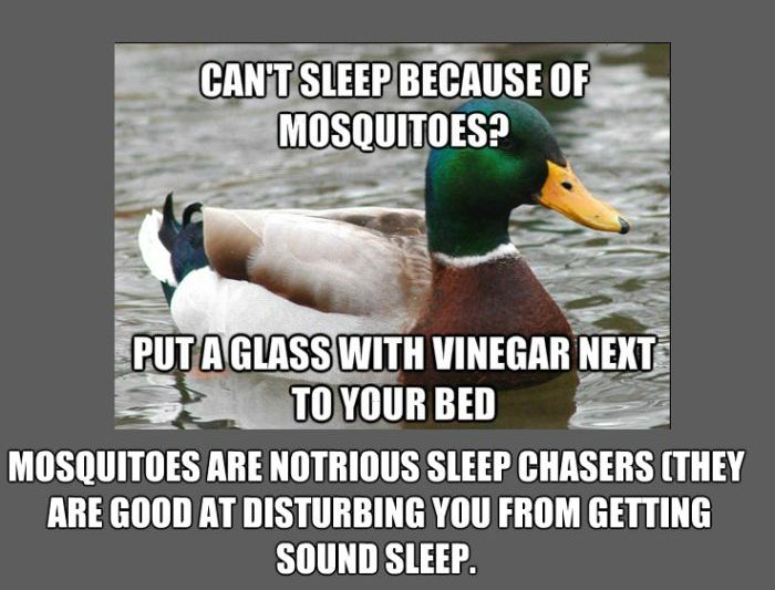Facts About Mosquitos (5 pics)