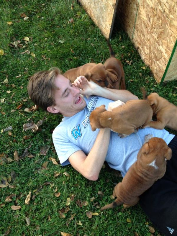 When Dogs Attack (6 pics)