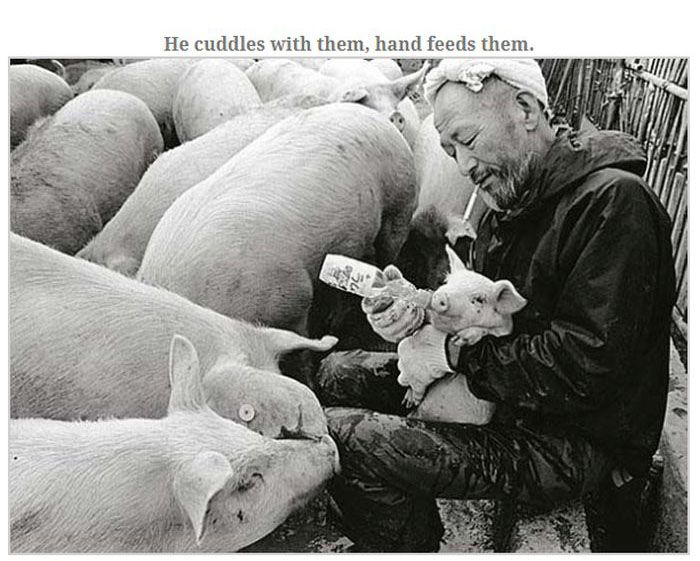 Farmer Who Loves His Pigs (13 pics)