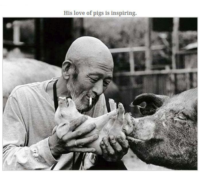 Farmer Who Loves His Pigs (13 pics)