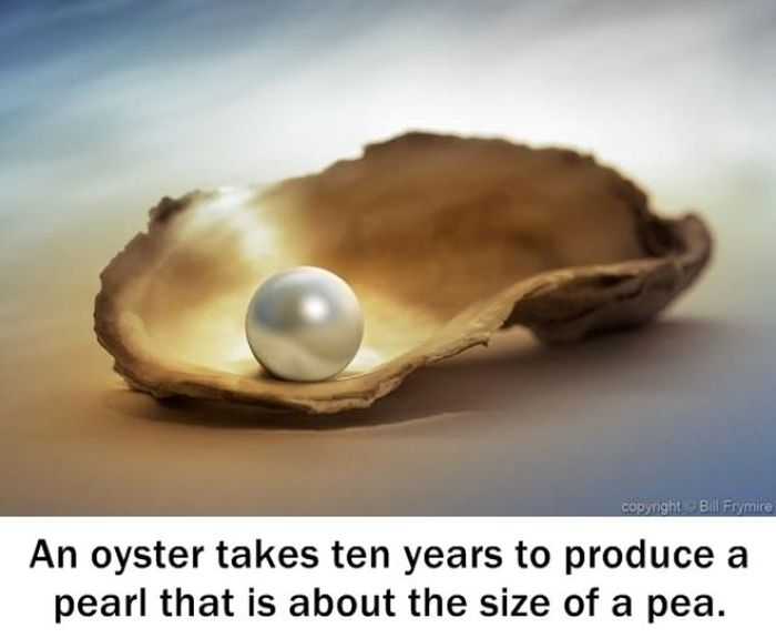 Interesting Facts (25 pics)