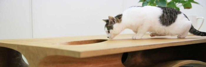This Table Has Built In Tunnels For A Cat (6 pics)