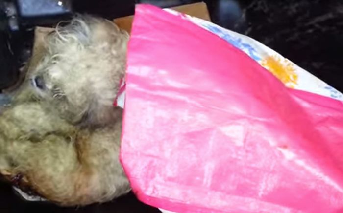 This Dog Was Thrown In A Trash Can, See What Happened To It After (8 pics)