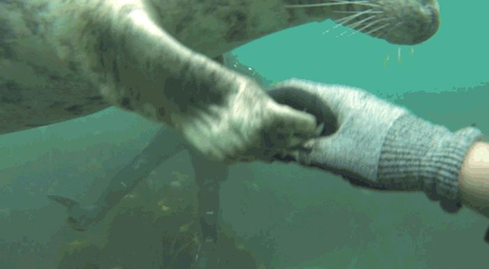 These Playful Seals Want To Be Your Friend (5 gifs)