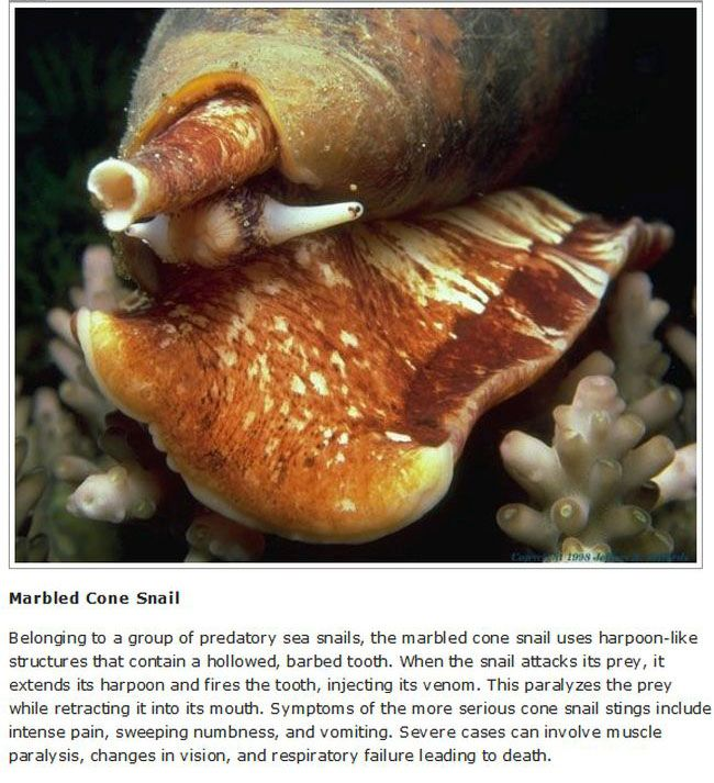 10 Lethal Animals You Hope To Never See In Real Life (10 pics)