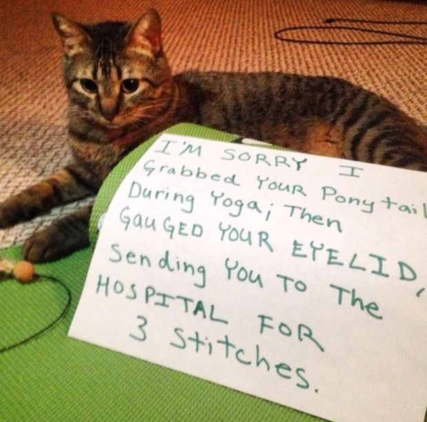 This Cat Caused His Owner To Get Stitches (3 pics)