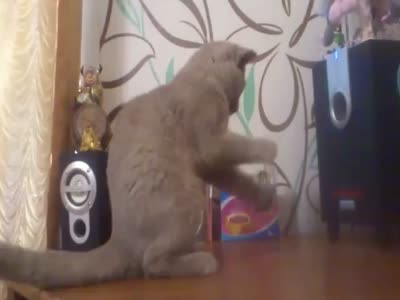 Cat Gets Confused By Subwoofer Sounds
