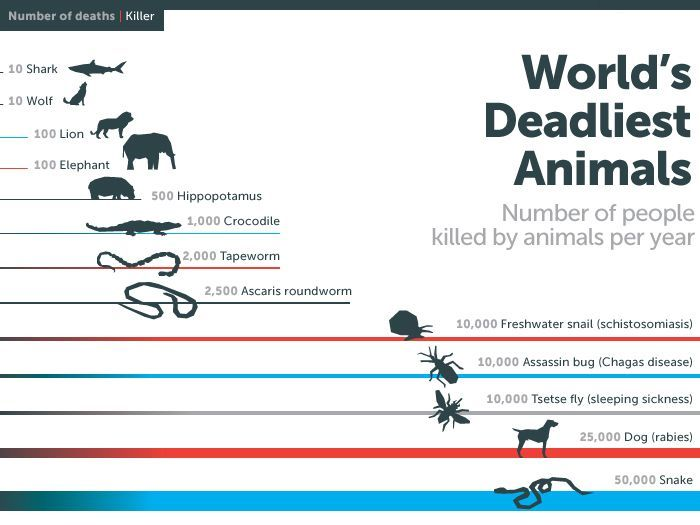 Find Out What The World's Deadliest Animal Is (infographic)