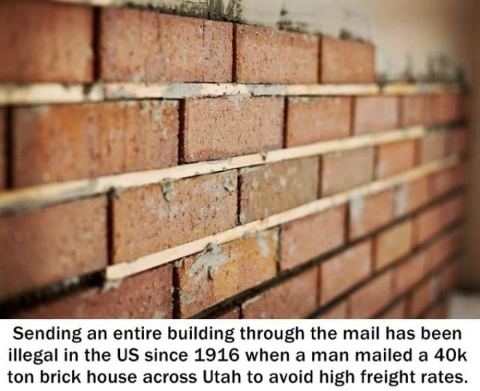 Random Facts That Will Make You Sound Smarter (25 pics)