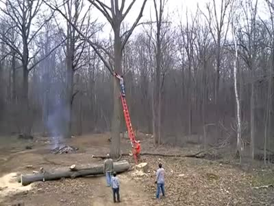 Cutting The Tree Gone Wrong