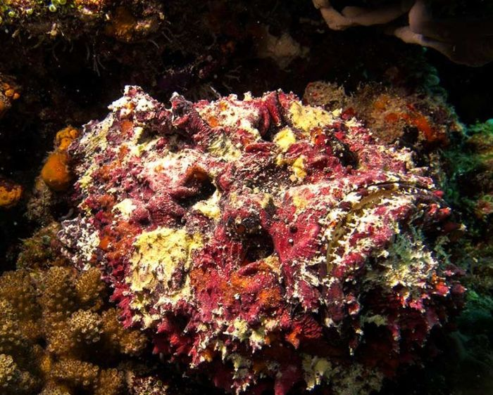 Watch Out For Stonefish They Come Out Of Nowhere (6 pics)