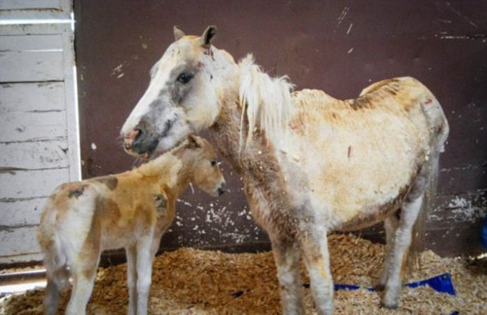 This Pony Proves There's Nothing Like A Mother's Love (7 pics)