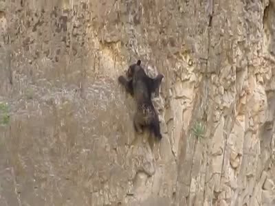 Bear Climbs The Mountain