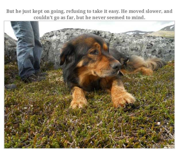 Man Rememebers His Dog That Passed Away (16 pics)