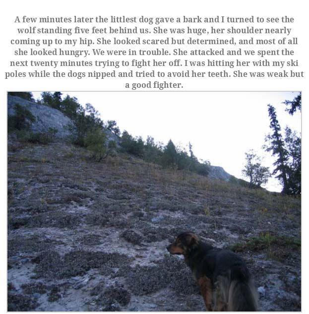 Man Rememebers His Dog That Passed Away (16 pics)