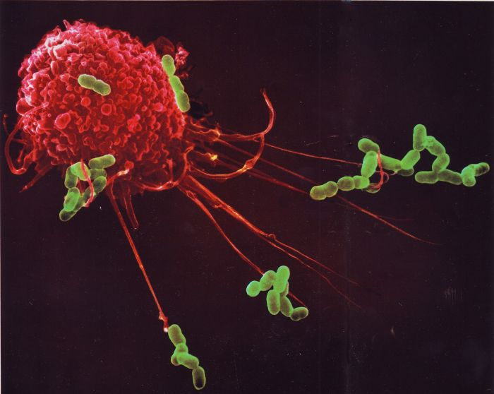 There's A War Going On Within Your Immune System (16 pics)