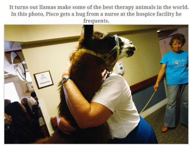 The Most Heroic Animals You're Ever Going To See (12 pics)