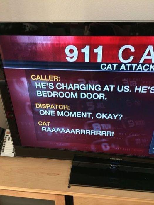 Weird Local News Captions. Part 9 (38 pics)