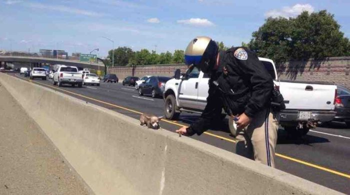 This Adorable Little Dog Got Lost On The Highway (2 pics)