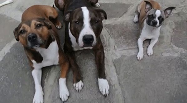 These Dogs Prove That Size Doesn't Matter (5 gifs)