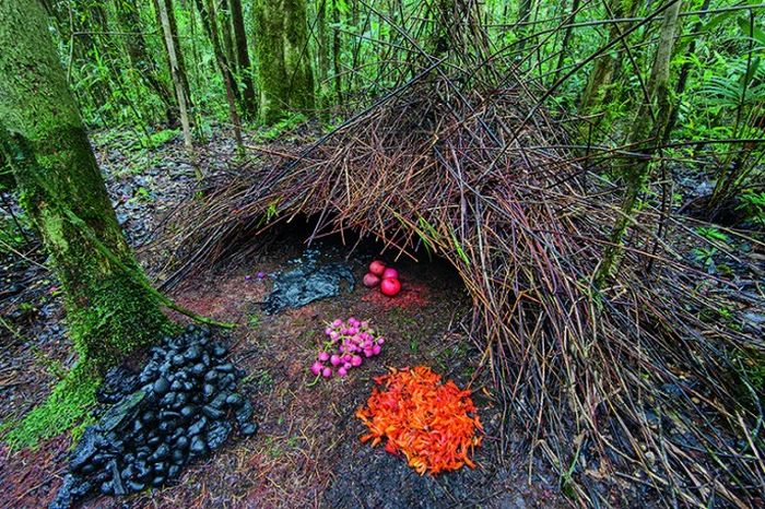 Beautiful Homes Built By Animals (11 pics)