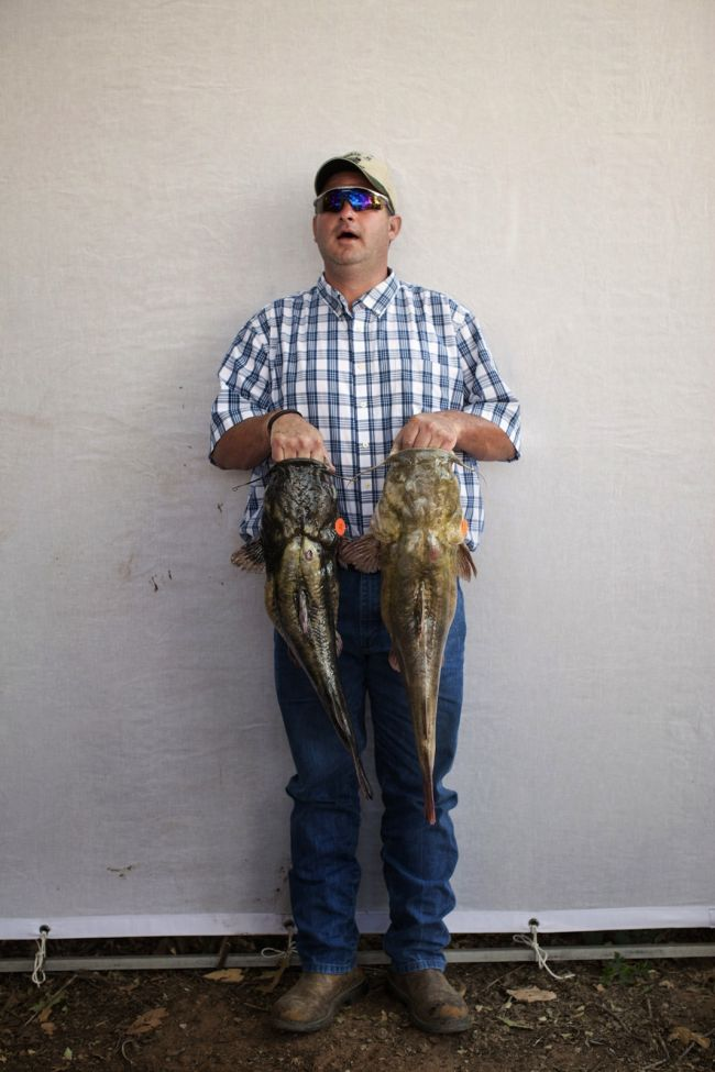 Would You Noodle These Giant Catfish? (32 pics)