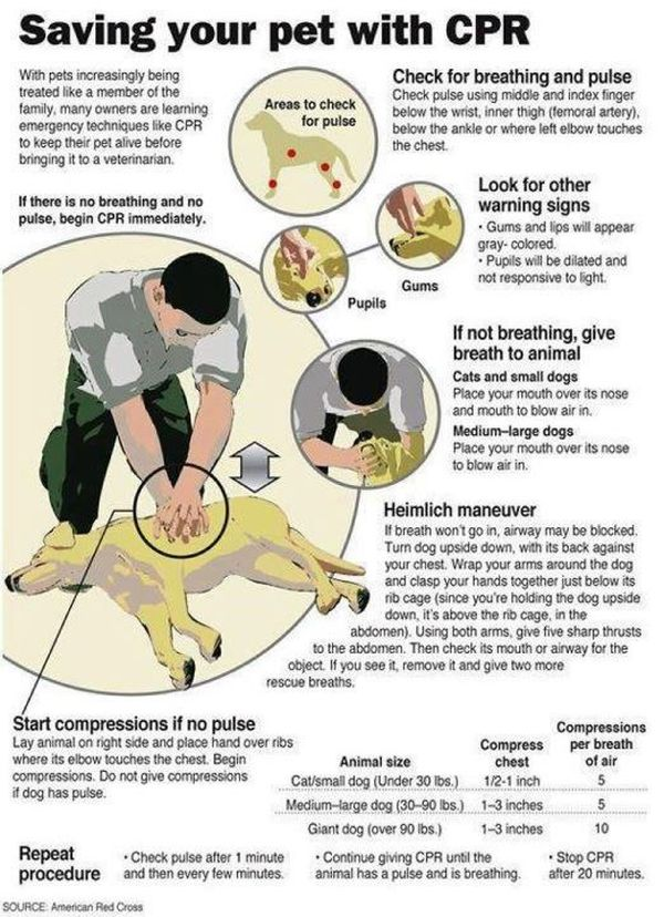 Learn How To Perform CPR On A Dog