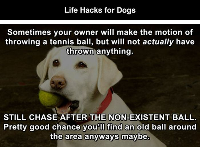 Hilarious Life Hacks For Dogs (7 pics)
