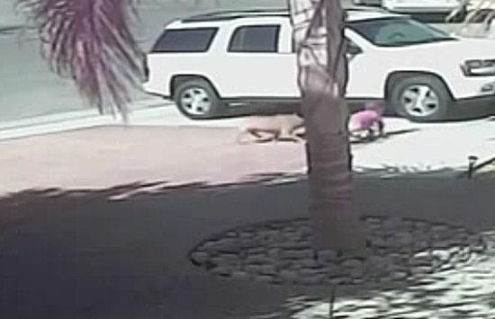 Cat Saves Little Boy From a Dog