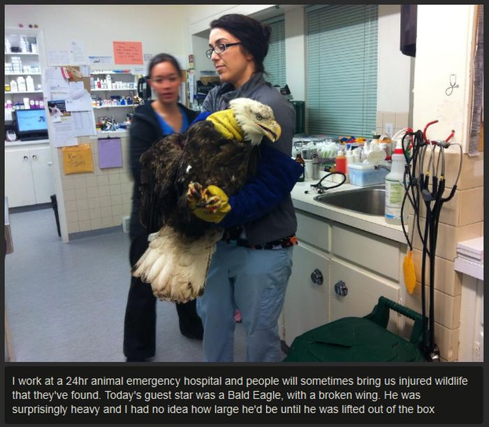 The Animal Hospital Never Expected This Guest To Arrive (7 pics)