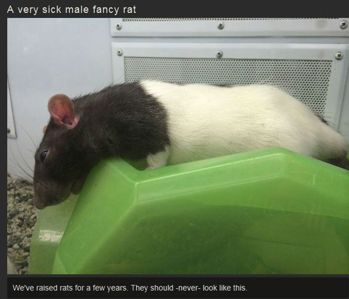 The Grossest Things You'll See At Petco (8 pics)
