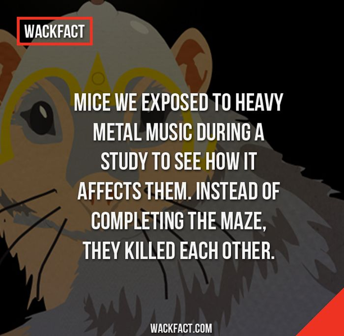 Wack Facts That Might Blow Your Mind (13 pics)