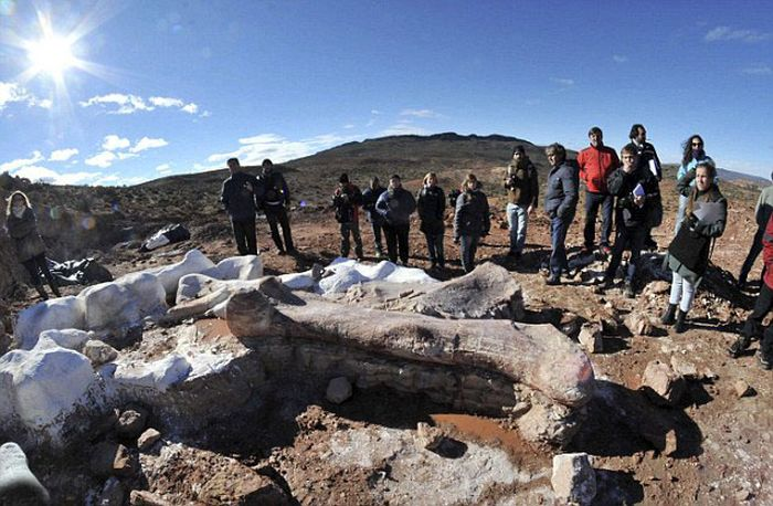 Largest Dinosaur Ever Gets Discovered In Argentina (11 pics)