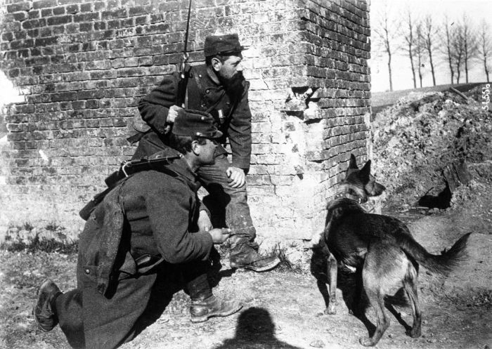 The Animals That Helped Fight World War I (45 pics)
